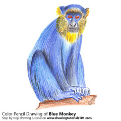 Blue Monkey with Color Pencils (drawingtutorials101.com) Tags: blue monkey diademed cercopithecus mitis monkeys wild animals sketching pencil sketch sketches drawing draw speeddrawing timelapse timelapsevideo coloring color how