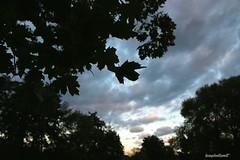 Herbst. (leasphotowelt) Tags: landscape herbst picoftheday fotografie 1200d autumn canon photography clouds sky canonphotos pic photo plants eos nature perspektive teamcanon canonglobal