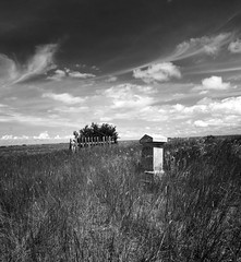 Quiet whispers (brakes4bunnies) Tags: alberta abandoned cemetery blackandwhite grave graveyard