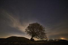 Light me up (Budoka Photography) Tags: tree nature sky nightphoto nightheaven nightsky night stars starheaven starry serene outdoor longexposure le samyang14mmf28 tripod tranquility landscape rönneberga cloud clouds sonyalphailce7rm2 dusk
