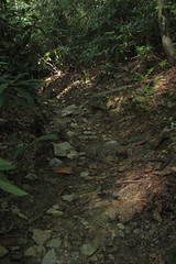 shady path (Molly Des Jardin) Tags: park trees plants usa rock stone forest rocks state pennsylvania earth path walk rocky dirt shade lancaster shady 2014 undergrowth susquehannock drumore 43215mm