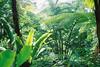 F1020031_lr (chi.ilpleut) Tags: trees green zoo singapore weekend jubilee august 2015 ilovegreen greengreengrasses jubileenationalday