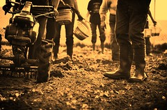Potato Harvesting (jule.stargardt) Tags: thanksgiving family autumn fall feet field sepia nikon legs familie working harvest feld potato crop erntedank beine kartoffel ernte harvesting d5100