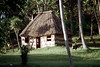 28-481 (ndpa / s. lundeen, archivist) Tags: trees house color building film animals fiji rural 35mm nick goats southpacific 28 thatchedroof 1970s 1972 dewolf oceania fijian pacificislands rurallife thatchroof nickdewolf photographbynickdewolf reel28
