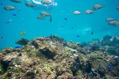 20150922-DSC_4414.jpg (d3_plus) Tags: sea sky fish beach japan scenery underwater diving snorkeling  shizuoka    apnea izu j4  waterproofcase    skindiving minamiizu       nikon1 hirizo  1030mm  nakagi 1  nikon1j4 1nikkorvr1030mmf3556pdzoom beachhirizo misakafishingport  1030mmpd nikonwpn3 wpn3