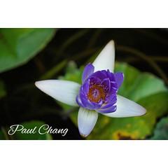 Lotus blooming at Jogyesa temple # #jogyesatemple # # # #lotus #seoul #korea # # # #instagram #instagramers #instadaily#sony #a7r2 (Kind.Korean) Tags: temple lotus korea seoul jogyesa   uploaded:by=instagram