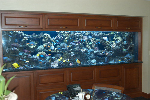 1500 Gal Custom Reef - Corporate Office - CT