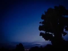 Dusk (tezzer57) Tags: sky tree london square dusk squareformat southlondon balham londonist iphoneography instagramapp