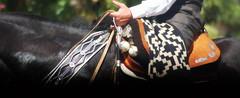 Mi flete negro (Eduardo Amorim) Tags: horse southamerica argentina caballo cheval pferde poncho cavallo cavalo gauchos pferd ayacucho pampa riendas hest pala hevonen apero gaucho  amricadosul carona boleadoras hst platera gacho  amriquedusud provinciadebuenosaires  recado gachos  basto sudamrica suramrica amricadelsur  sdamerika badan cabresto  pilchas  buenosairesprovince pilchasgauchas recao pampaargentina cabestro americadelsud plateracriolla rebenque  americameridionale boleadeiras rdeas eduardoamorim pampaargentino platera criolla