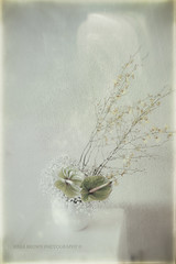 Softness (Rrea Brown (Photography)) Tags: stilllife flower lensbaby ikebana softfocus rreabrownphotography