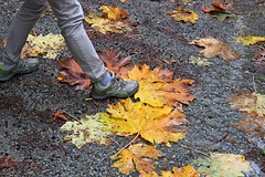 IMG_1078 (Ron_3) Tags: red wet leaves yellow grey maple shoes leg large ground rainy huge