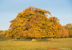 Hatfield_Forest-36 (Eldorino) Tags: park uk morning autumn trees nature forest sunrise landscape countryside nikon britain centre jour hatfield bishops stortford essex hertfordshire stanstead hatfieldforest