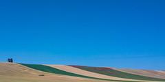 Grano (giustotti) Tags: cameraphone nature italia natura pasta giallo cielo nophotoshop giugno turismo rosso azzurro colori paesaggi puglia paesaggio monti oro giuseppe grano campi frumento totaro tradizione cereali meridione mietitura dauni tertiveri nokia808 viaggiareinpugliait giuseppetotaro