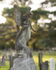 (Attila Pasek) Tags: 300mmf28 tamron angel bokeh broken cemetery graveyard statue