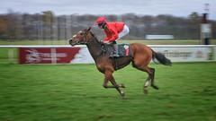 horse racing (ddimblickwinkel) Tags: horse racing nikon tamron pferd sport reiten dresden sachsen animal speed art d300 d300s