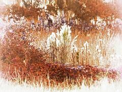 autumnish Florida... (al-ien) Tags: weeds florida ruralflorida
