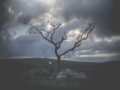 Gnarly Tree at Combestone Tor (i-r-paulus) Tags: gnarly gnarlytree cctvlens cctv cmount creative landscape unusual autumn tree twisted