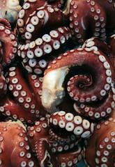 Tsukiji Fish Market | Octopus (Toni Kaarttinen) Tags: japan  japonia    jap japonsko jaapan  japani japon xapn    japn jepang an tseapin giappone  japna japonija  japo  japonska japn hapon  japonya nht bn tokyo tokio japanese tsukijifishmarket tsukiji fish market fishmarket octopus