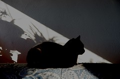 NERUDA (zipaart) Tags: gatto al sole nero atmosfera poesia effetti luce