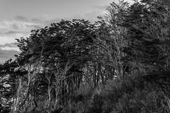 Fuerte Bulnes (Medigore) Tags: cielo medigore canont3i aire libre serenidad campo paisaje ngc nubes landscape black white chile tree forest blanco negro monocromtico fondo landscapes light shadows bosque clouds rbol planta parque forms love