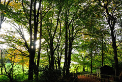 The summer sun is fading as the year grows old (late Breaks Devon) Tags: woods sun fading autumn autumnal leaves leaf hut woodland trees fence north devon chapel wood rsbp late breaks wald