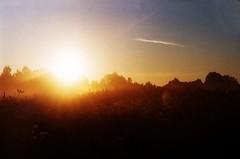 (darialesnaya) Tags:      film filmfoto sun
