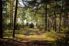 *** (pszcz9) Tags: polska poland przyroda nature natura las forest wiosna spring pejza landscape droga road biebrzaski parknarodowy nationalpark beautifulearth sony a77