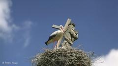 30491977165_e0b50c29e7_k (photoAKM/Ainars Meiers) Tags: stork latvianstork latgale latvia eu ec heaven theheavens family signs monitoring