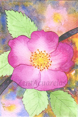 Pink Flower Nº 1 (Sonia Aguiar (Mallorca)) Tags: acuarela watercolor flower floralwatercolor flores pink walldecor wallart soniaaguiar stilllife colorful art artwork ornamental watercolour aquarell fineart originalpainting original originalart originalilustration archeswatercolorpaper aquarelle armonius natural botanical flora floral floralart flowerart flowers garden blossom flowering bloom plant impressionist contemporary pictorial stimulating picturesque flowertags romantic earth flowery rose slvester petiteart miniart natureart botanicalart miniatureart springflower etsy etsyshop etsyseller