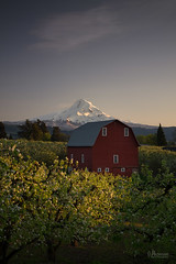 Orchard (jpeder55) Tags: mthood sunset barn blossoms hoodriver landscape orchard scenic spring trees