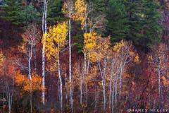 Autumn Refrain (James Neeley) Tags: idaho swanvalley fall autumn jamesneeley