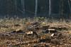 ckuchem-7205 (christine_kuchem) Tags: wald abholzung baum baumstämme bäume einschlag fichten holzeinschlag holzwirtschaft waldwirtschaft