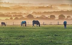 Misty Sunset (robinta) Tags: mist fog sunset pasture field pastoral horse telephoto landscape cleadon serene peaceful tranquil colour muted warmth ks1 pentax sigma18200mmhsmc