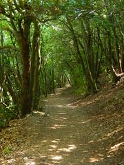. (daniele ideale costanzo) Tags: bosco sentiero alberi verde percorso sibillini