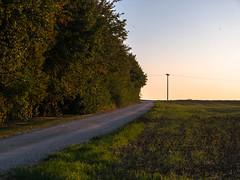 Hecke am Abend (Tobias Keller) Tags: abend abendlicht bavaria bayern deutschland donauries germany hecke huisheim jahreszeit landschaft natur schwaben sommer sonne swabia landscape nature sunsetlight sunshine geo:lon=10706043200013 exif:aperture=71 geocountry camera:make=panasonic exif:focallength=42mm geostate geocity geolocation camera:model=dmcg5 exif:lens=lumixgvario1442f3556 geo:lat=48820286600003 exif:isospeed=160 exif:model=dmcg5 exif:make=panasonic