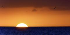 Surreal+Sunset