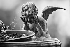 I Must Have Dozed Off ... (gecko47) Tags: cherub figure decorative planter pedestal plantstand pot metal outdoor cobwebs patina winged bw blackwhite depthoffield ornamental