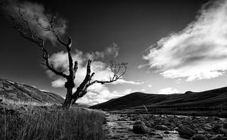 Glen Clunie Tree
