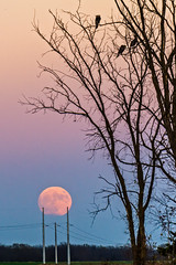 Supermoon Rising 1 (denny.weinmann) Tags: lawrenceks earth explore lfk moon moonrise november photography sonya6000 sonyalpha sonyimages supermoon travel