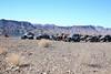 11-5-16 Roveys Needle Ride-102 (Cwrazydog) Tags: arizona trailriding