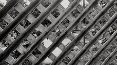 Through the Fence, ii (F.emme) Tags: 7daysofshooting 7dos week19 squares blackandwhitewednesday fence lattice