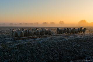 Frosty, foggy sundown...
