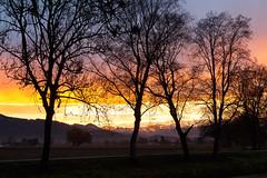 Sunrise while Foehn (Harald Schnitzler) Tags: foehn clouds fhn wind warm alps sunrise silhouttes trees mountains alpen rheintal