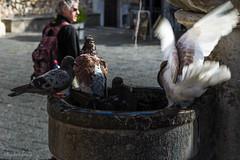 La cola del bao (allabar8769) Tags: bao fuente italia palomas plaza sicilia taormina