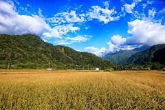 (M.K. Design) Tags: mk                    mkdesign taiwan guoshin renai river farm rice  recaro easylife nikon d800e afs 105mmf14e ed primelens baby infant landscapes hdr nature bokeh golden mountains family travel