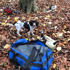 """Tom from Stump Removal Services dog Lily is keeping on top of the ground work today, in between chewing kit ! #wardenstreecare <a style=""""margin-left:10px; font-size:0.8em;"""" href=""""http://www.flickr.com/photos/137723818@N08/31176556106/"""" target=""""_blank"""">@flickr</a>"""