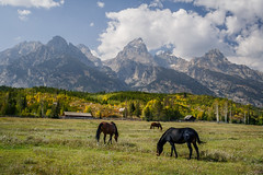 Tetons and Horses Grazing (Jeffrey Sullivan) Tags: grand teton national park landscape nature travel photography wyoming united states canon photo copyright jeff sullivan usa horses mountains grandtetonnationalpark