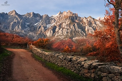There Is No Wrong Path (MANUELup) Tags: autumn trees sky landscape red stones clouds way path brown snow warm wall cow mountain woods high delicate right rockymountains wrong spain cantabria potes picosdeeuropa liebana