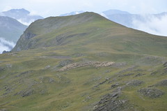 Mountain's sheperd (dfromonteil) Tags: mountain montagne berger sheperd troupeau paysage landscape nature wilderness green vert clouds nuages
