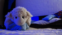 Beeeh Furry (Kuken Bruder) Tags: pillow sheep bed adorable funny